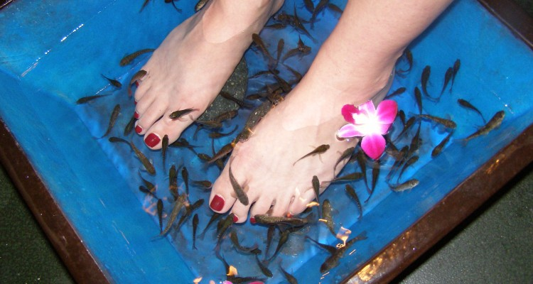 Fish pedicure with dr fish glamroz for Fish eat dead skin spa
