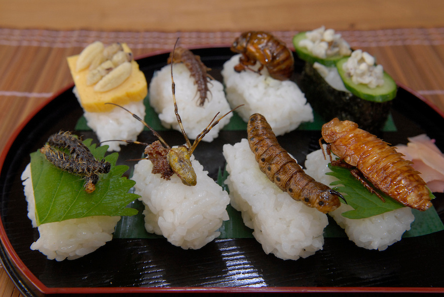 insect sushi yummy or creepy crawly cuisine glamroz
