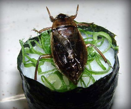 sushis_insectes4